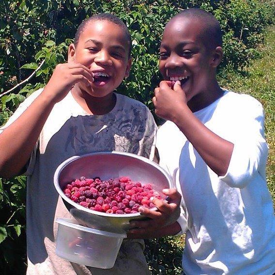 B.U.G.S. students pick and eat fresh raspberries in Baltimore, Maryland