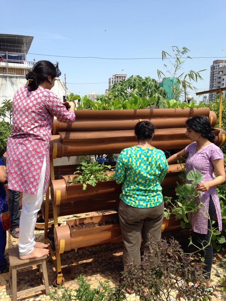 Members of Fresh & Local gardening in Mumbai, India