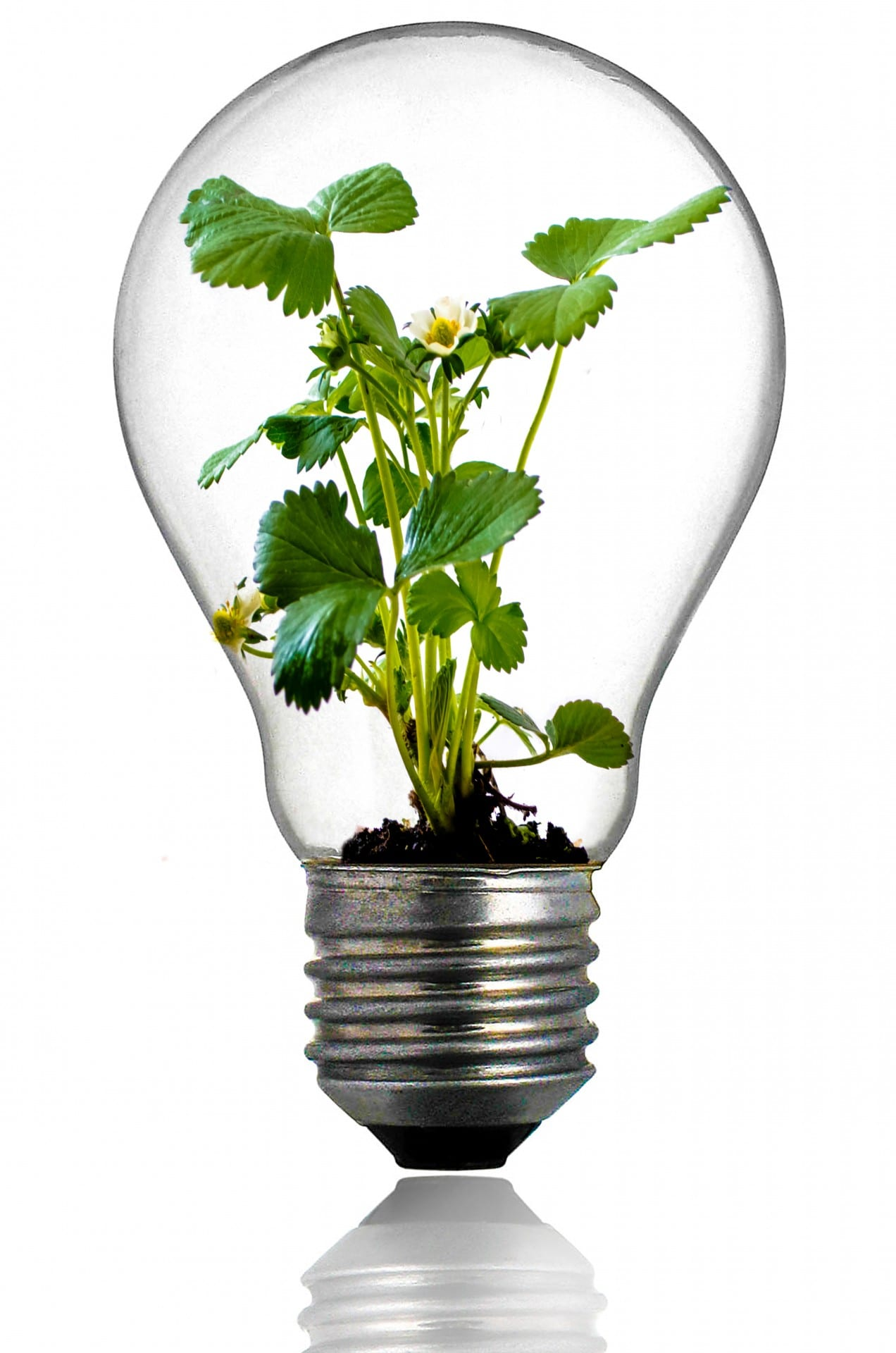 green-plant-in-the-light-bulb.jpg