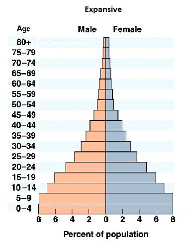 What are the different types of population pyramids? - Population ...