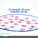 "Screenshot of video lesson plan ""World of Difference"" showing an example of a habitat circle with allotted resources"