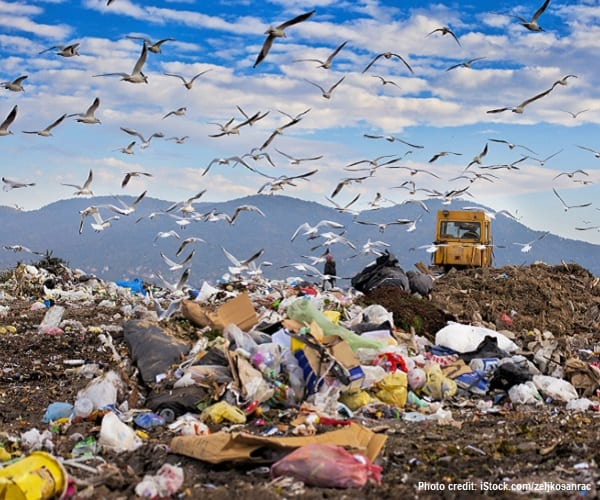 Pile of garbage in landfill with birds flying overhead