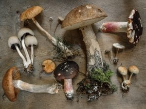Mushrooms and various fungi displayed on a wooden table