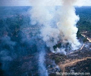 Forest in Sumatra being removed by slash and burn to make way for palm oil plantations.