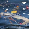 Different types of solid waste floating in ocean water.
