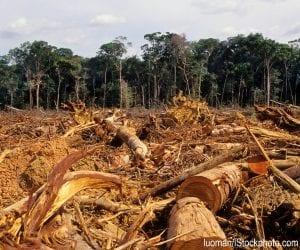 Deforestation in the Amazon rainforest.