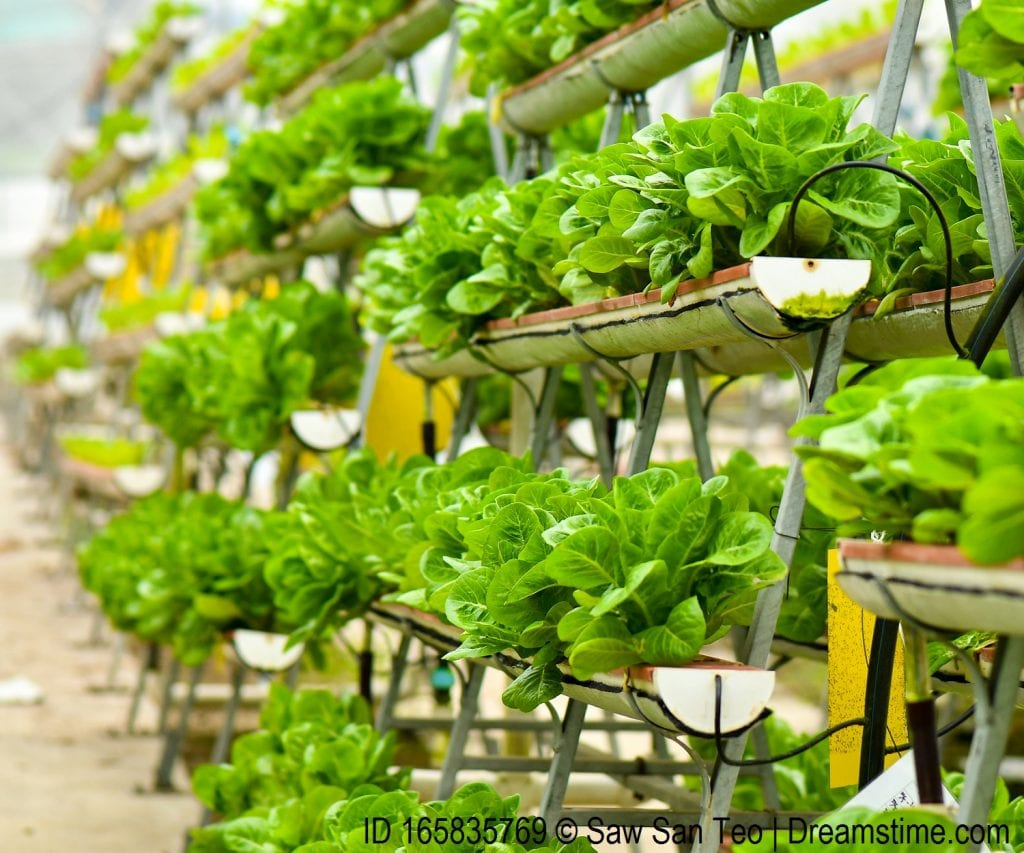Vertical urban farming technology in Singapore.