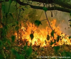 Amazon rain forest is burning and releases methane
