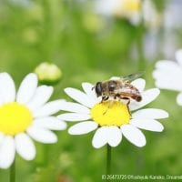 Bees and flowers are both part of an ecosystem where everything is connected to everything else