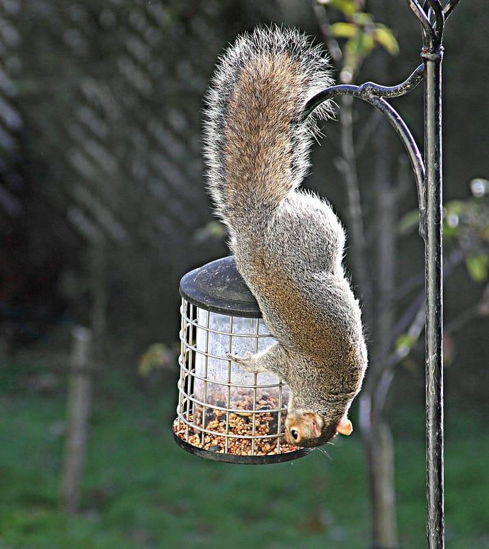 Birdfeeder with squirrel