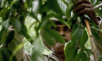 Close up of migrant worker picking peaches