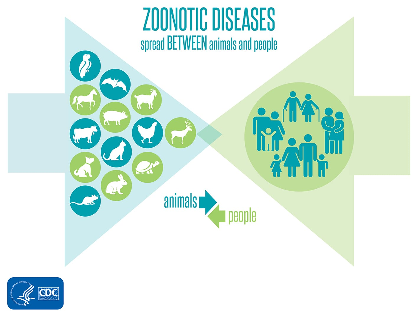 Zoonotic diseases spread between animals and people infographic