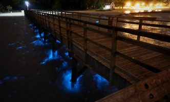Bioluminescent harmful algal bloom near dock at Yorktown Beach, Virginia