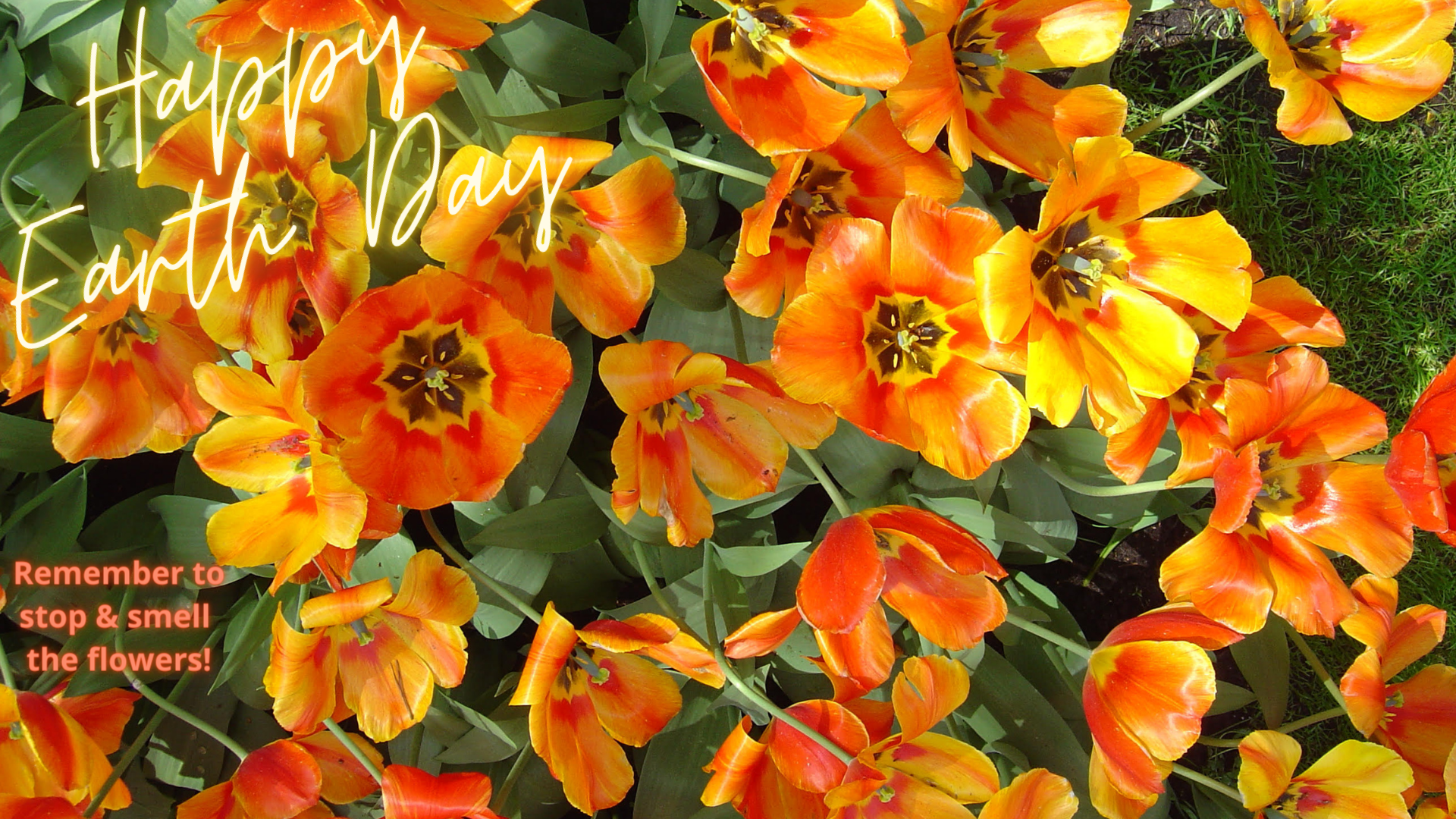 Zoom Earth Day Background Flowers
