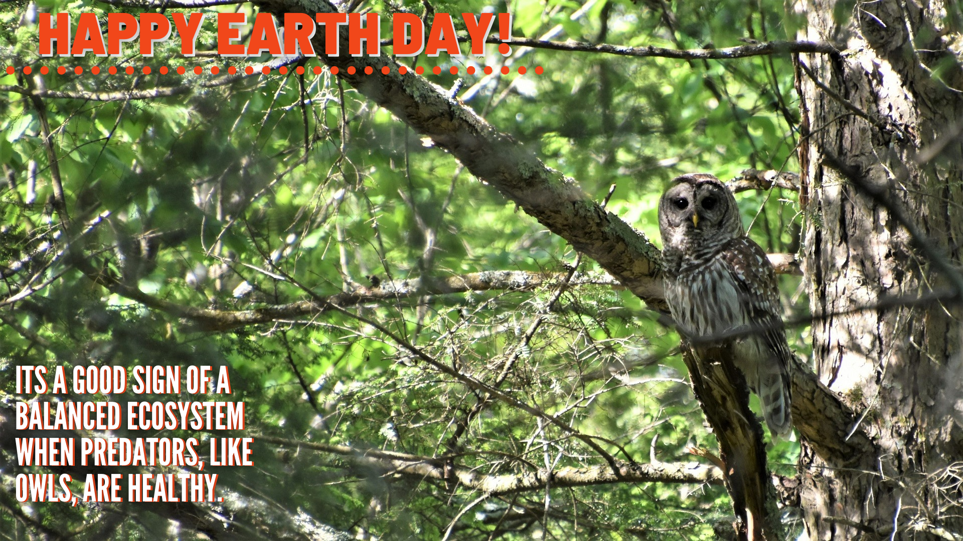 Zoom Earth Day Teacher Background Waterfall