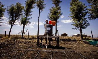 A woman near Gilgil, Kenya pours a bucket of water into a drip irrigation system